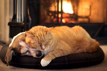 Pet Pain Management in Monroeville: Dog and Cat Asleep by the Fire