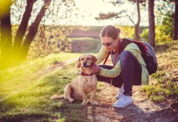 What You Need to Know About Safely Removing a Tick from Your Dog